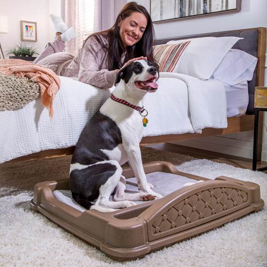 step2 Close 'N' Cozy Hideaway Dog Bed